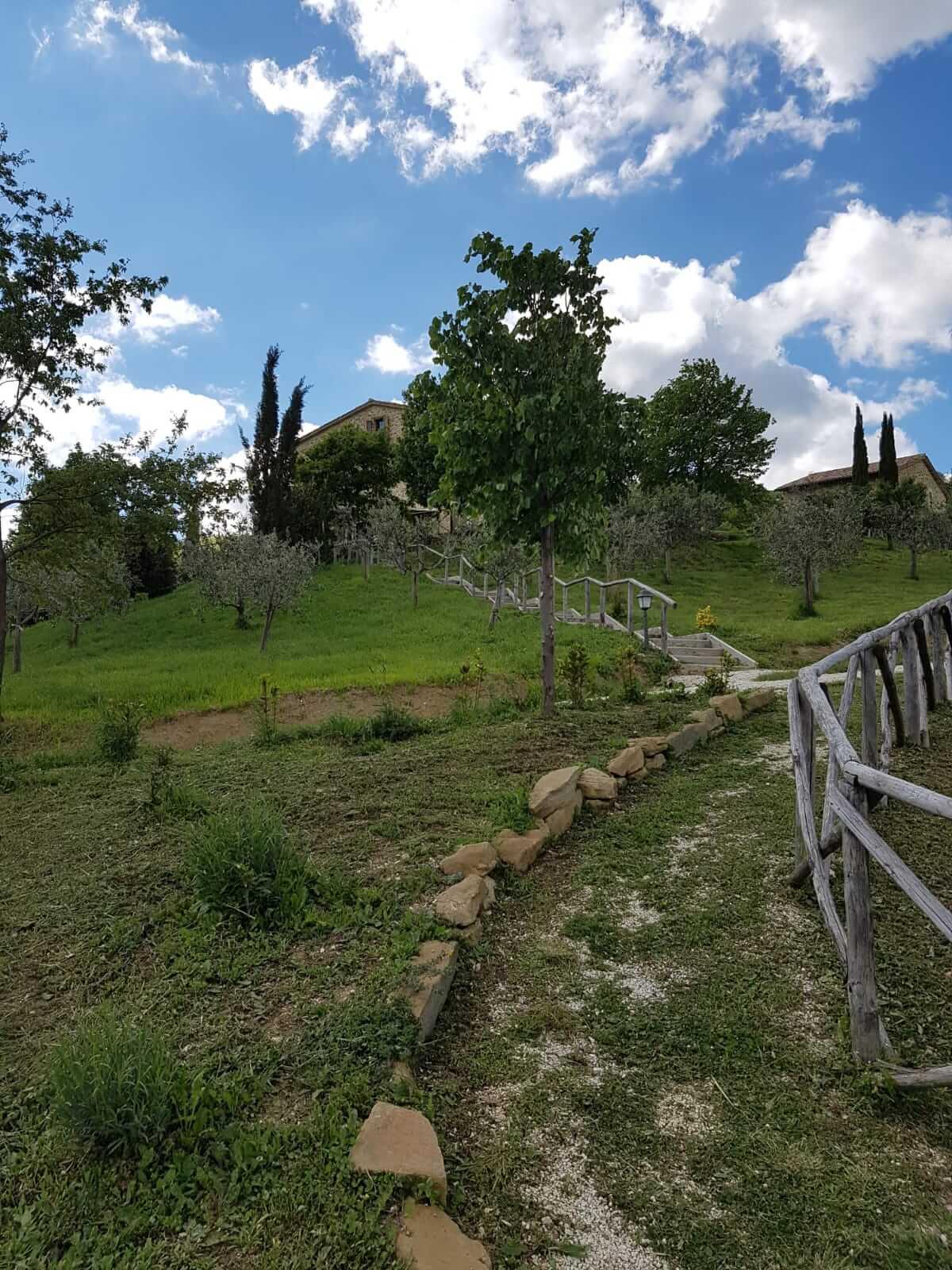 Assisi Maggio 2019 - Fiori del sottobosco