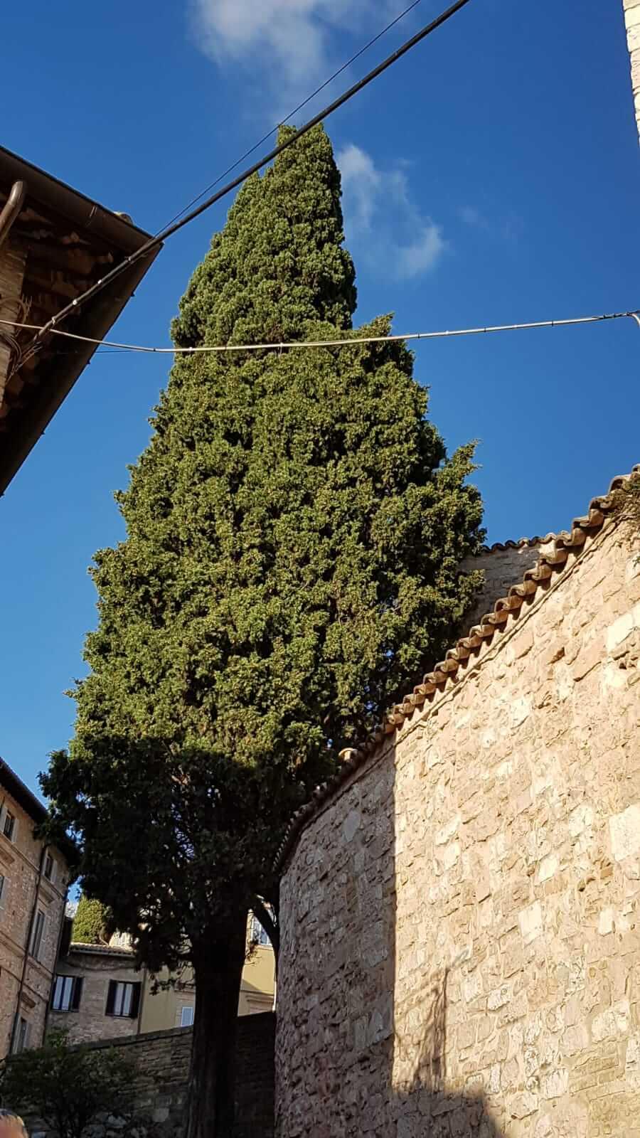 Assisi : strade di Assisi